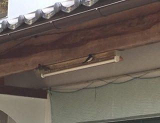 が 家 作る 巣 つばめ を